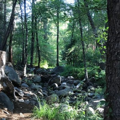 Idyllwild, California and Cabin Cooking