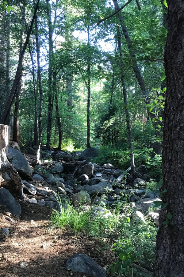A creek running through a forest of lush green trees in Idyllwild.