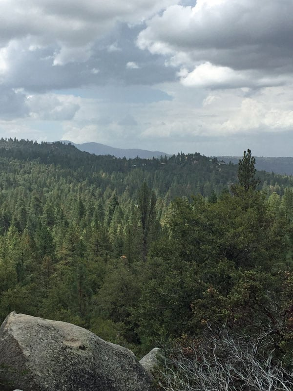 View looking out over the trees in Idyllwild.