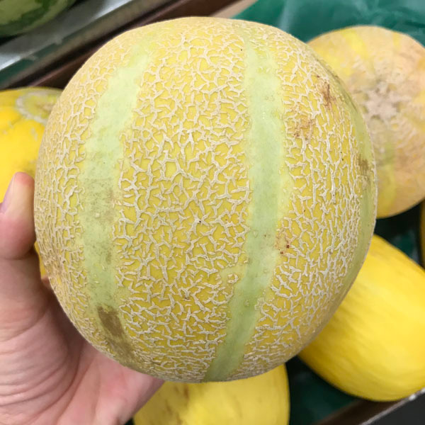 A hand holding a green and yellow melon.